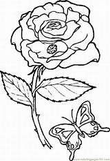 Colorat Primavara Pagini Trandafiri Planse Rosa Colorir Jardim Imagens Coloring Colorear Traceable 2009 Flowers Encantado Dibujo Mariposa Jordi Sant Pentru sketch template