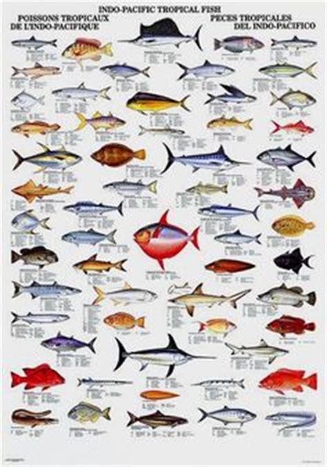 fish identification guide thailand trip pinterest