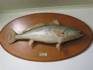 photos and carvings from catch and release fish the hunting page