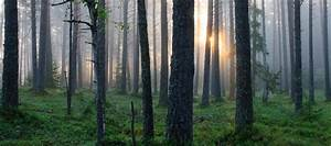 The, Story, Of, Estonian, Forest, And, Ancient, Woodlands, U2014, Estonia