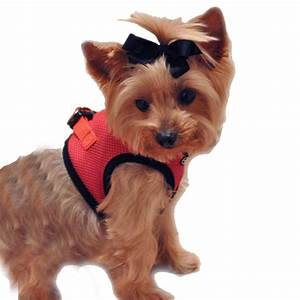 choke free mesh step in dog harness flame red