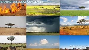 The Grassland Food Web Temperate African U0026 Tropical