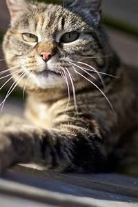 Wie Fange Ich Eine Katze : ich w nschte ich w re eine katze ~ Markanthonyermac.com Haus und Dekorationen