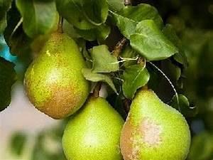 Arbres Fruitiers Nains En Pleine Terre : les arbres fruitiers plantation et entretien ~ Premium-room.com Idées de Décoration