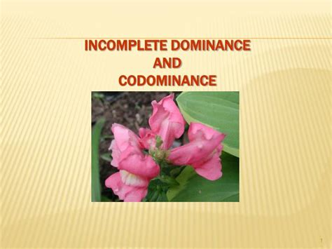 Ppt  Incomplete Dominance And Codominance Powerpoint Presentation Id3219608