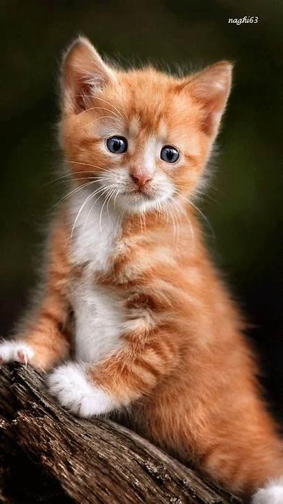 Orange Kittens Tabby Cats Kitty Cat Kitten