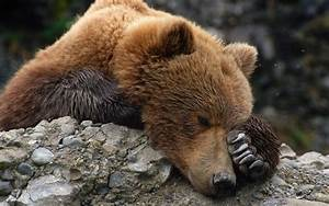 World U0026 39 S Saddest Bear Is Getting A New Home