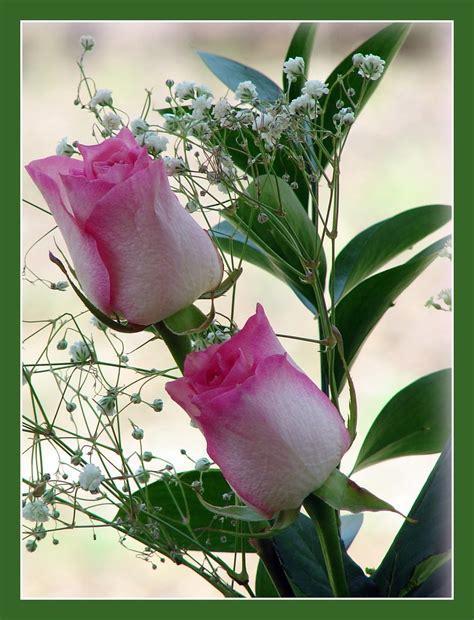 We did not find results for: Roses For My Friends ...   Happy St Patricks Day . Wishing ...