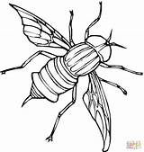 Fly Coloring Pages Printable Flies Fruit Drawing Supercoloring Guy Silhouettes Getcoloringpages sketch template