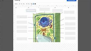 Plant Cell Gizmo Directions