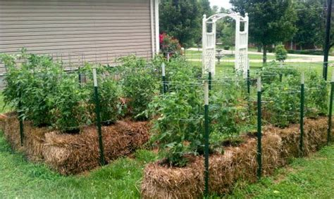 straw bale gardening fertilizer elkmont alabama you can use straw bales for what