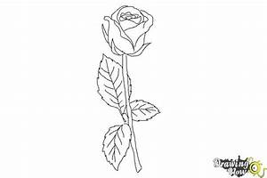 How to Draw a Rose Step by Step For Beginners | DrawingNow