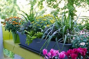 Balkonkästen Bepflanzen Beispiele : balkonk sten bepflanzen balkonk sten ideen f r alle ~ Lizthompson.info Haus und Dekorationen