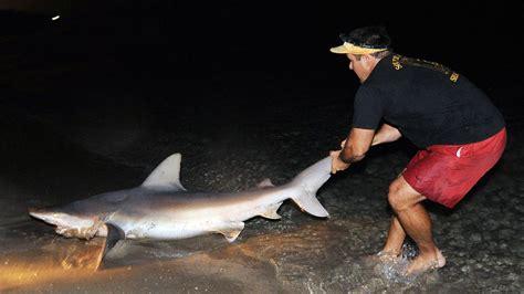 shark fishing beach florida sun sentinel fl shore south ashore dragged delray being file crack down state reg