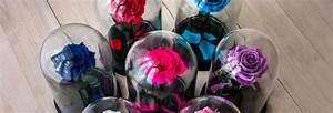 Rose Eternelle Sous Cloche : pompes fun bres r le responsabilit prix ~ Farleysfitness.com Idées de Décoration