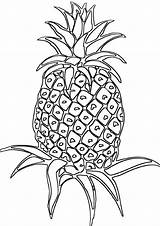 Pineapple Coloring Pages Pineapple1 Printable Print Perfect sketch template