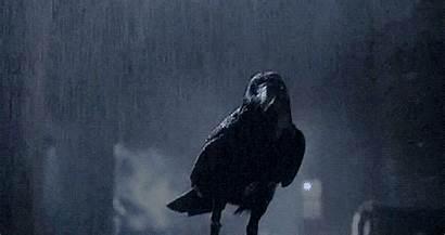 Ravens Raven Bird Sodahead Crows