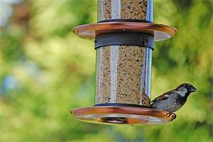 what do backyard birds eat 28 images bird feeder time With does hydroxycut make you go to the bathroom