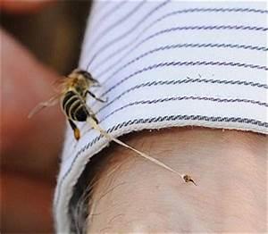 Подмор пчел лечение аденомы простаты
