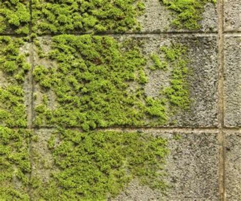 how to remove moss from patio pavers and other hardscaping