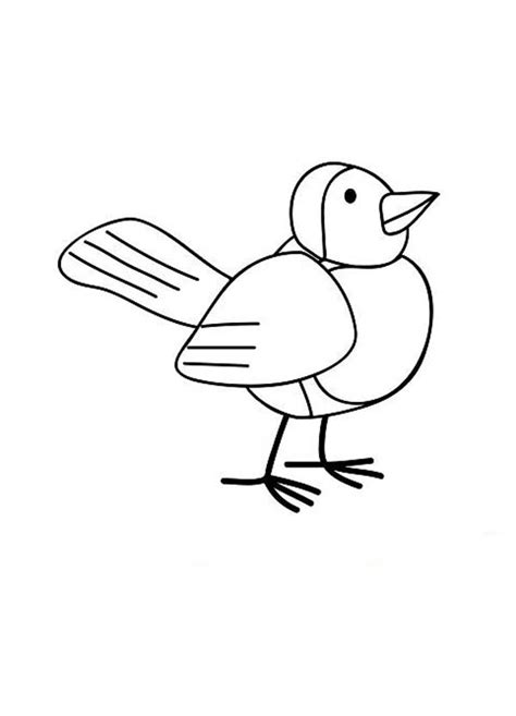 robin bird drawing coloring page  print