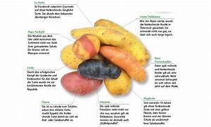 Kartoffeln Zum Einkellern Kaufen : kartoffeln anpflanzen ~ Lizthompson.info Haus und Dekorationen