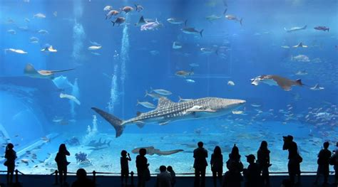l aquarium le plus grand du monde