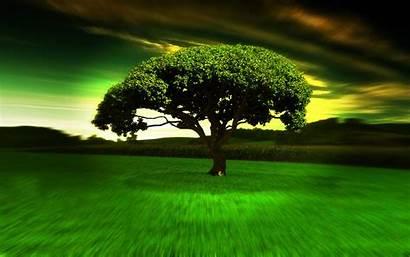 Widescreen Hypno Wallpapers Tree