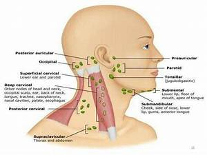 Lymph Drainage Of Head And Neck