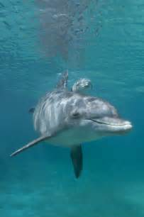 Baby Bottlenose Dolphin Facts