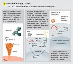 A Visual Guide To The Sars-cov-2 Coronavirus