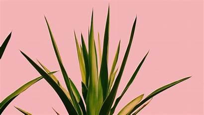 Aloe Vera Skin Care Plant Skincare Allure