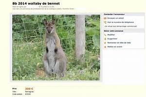 Le Bon Coin 67 Vente Immobiliere : un b b kangourou vendre pour 300 ~ Dailycaller-alerts.com Idées de Décoration