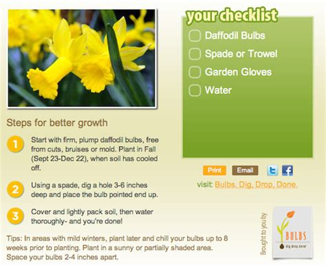 adding to your and garden with bulbs aka