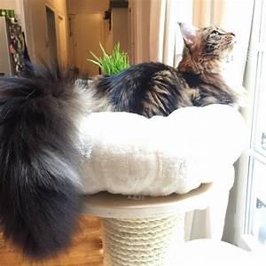 Arbre À Chat Pour Gros Chat : arbre a chat cocoon ~ Nature-et-papiers.com Idées de Décoration