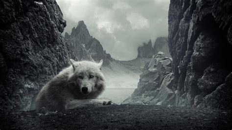 Download Wolf Wallpaper Black And White Gallery