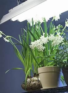 Lampen Für Pflanzen : beleuchtung von pflanzen lampen und beleuchtung ~ A.2002-acura-tl-radio.info Haus und Dekorationen