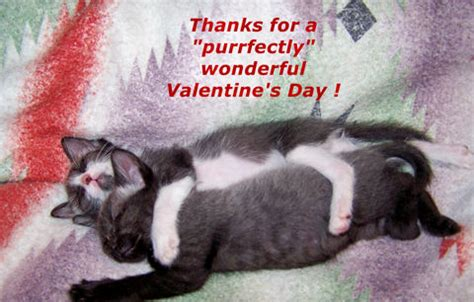 valentines day cats great valentines day