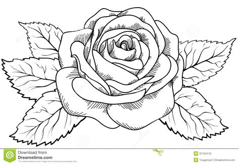 Pencil And In Color Drawn Rose Outline