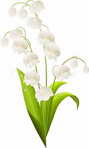 Lily of the valley isolated on white background Stock