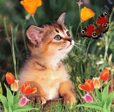 Cat And Butterfly  Butterflies Photo (14025209) Fanpop