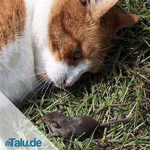 Katzenspielzeug Selber Machen Karton : katzenspielzeug selber machen schnelle ideen zum basteln ~ Frokenaadalensverden.com Haus und Dekorationen