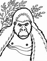 Coloring Pages Gorilla Cartoon Gorillaz Printable Animals Cliparts Print Clipart Animal Gorila Ape Library Opa Ge Snowflake Getcoloringpages Popular Template sketch template