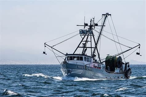 Alaska Commercial Fishing Boat by Commercial Fishing Injuries In Alaska Alaska Fishing