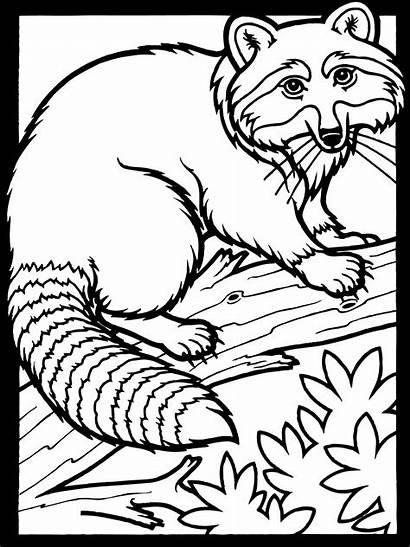 Coloring Raccoon Printable Worksheets K5worksheets K5 Bestcoloringpagesforkids