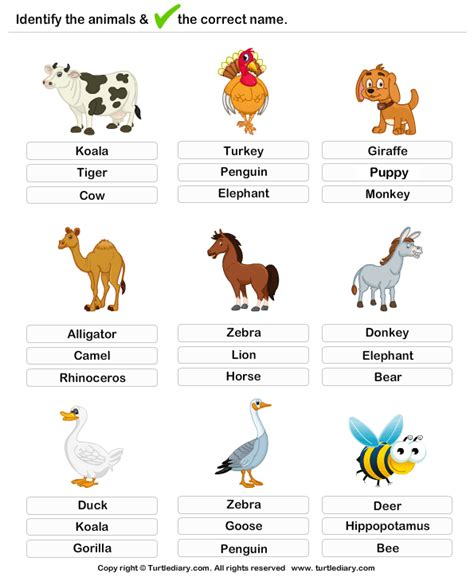 learning farm animals worksheet turtle diary