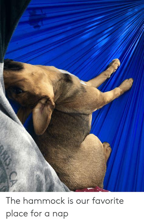 hammock   favorite place   nap hammock meme