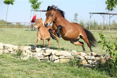 carrots horses miniature eat horse creative