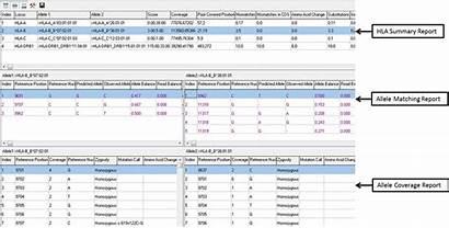 Hla Report Software Analysis Human Leukocyte Antigen