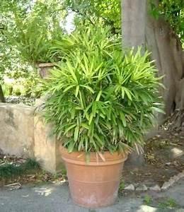 Cache Pot Plante : pot exterieur plante pot pour terrasse exterieur grand pot grand cache pot en prati plante ~ Teatrodelosmanantiales.com Idées de Décoration